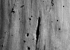 woodboring