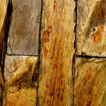 dry rot specialist in Waterloo